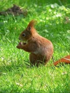 Nuts about Squirrels @ Kilbroney Park | Northern Ireland | United Kingdom