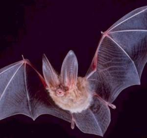 Creepy Creatures Halloween Trail @ Kilbroney Park   Rostrevor   Northern Ireland   United Kingdom
