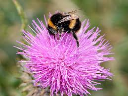 Bumblebees of Mourne @ United Kingdom