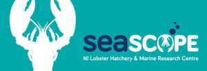Lobster Crafts and Colouring Fun @ Seascope, Units 14&15, Binnian Enterprise Park, The Harbour, Kilkeel